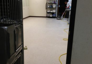 Waxing Floors in a Grooming School at Arlington TX 12 225355580cbbb81c639100ed7bfacadb 350x245 100 crop Waxing Floors in a Grooming School at Arlington, TX